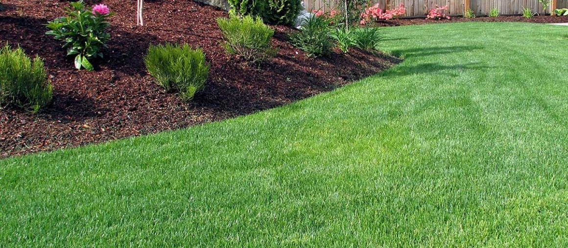 The Real Benefits of Organic Lawn Care