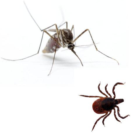 Tick & Mosquito Management